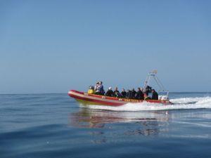 Sardine Run - flat seas