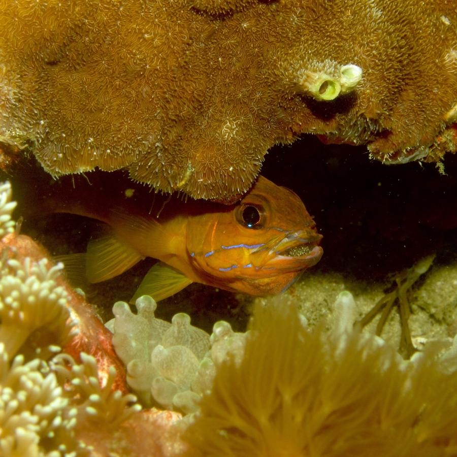 Underwater gallery from thePhilippines