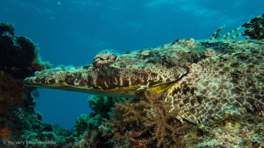 The Codfather – a week of diving off Mafiaisland